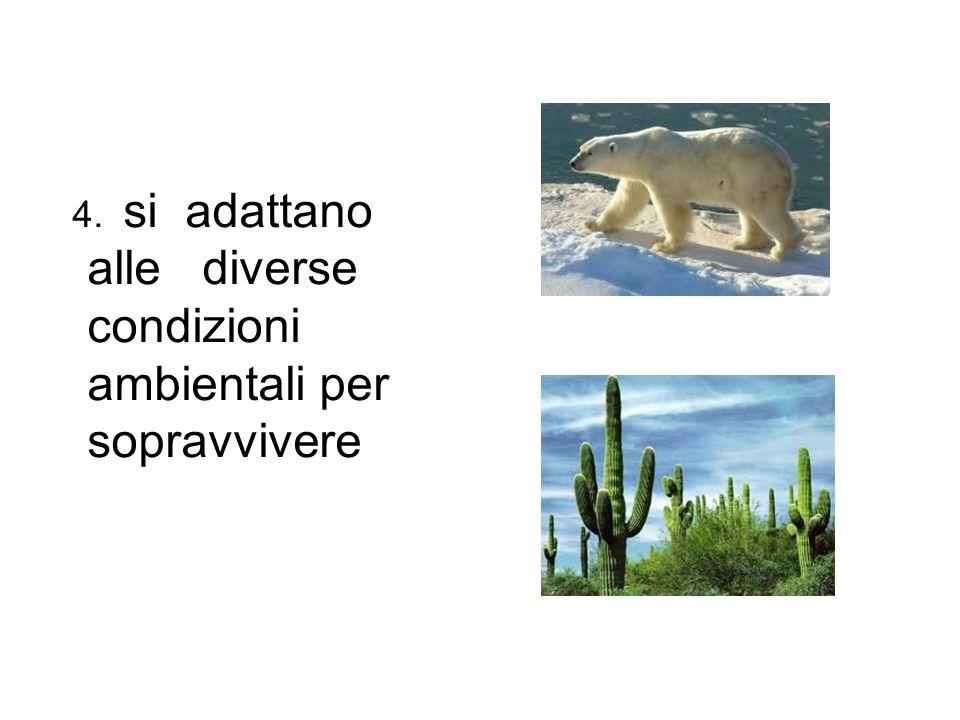 4. si adattano alle diverse condizioni ambientali per sopravvivere