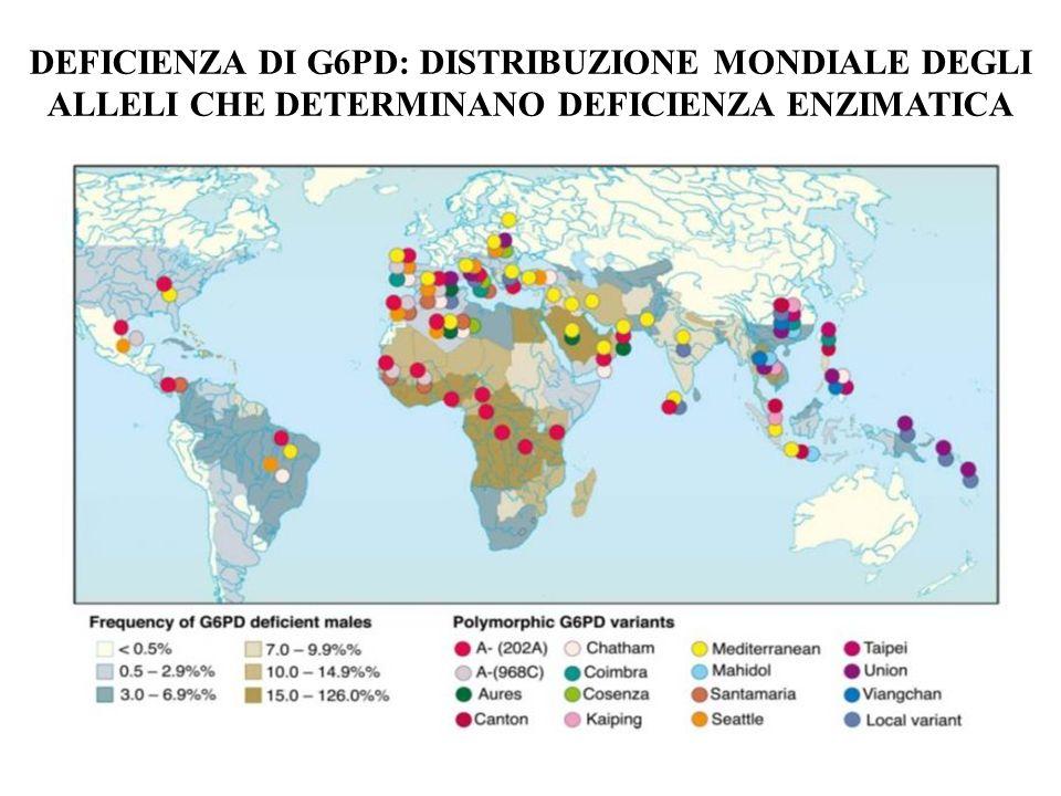 DEFICIENZA DI G6PD: DISTRIBUZIONE MONDIALE DEGLI ALLELI CHE DETERMINANO DEFICIENZA ENZIMATICA
