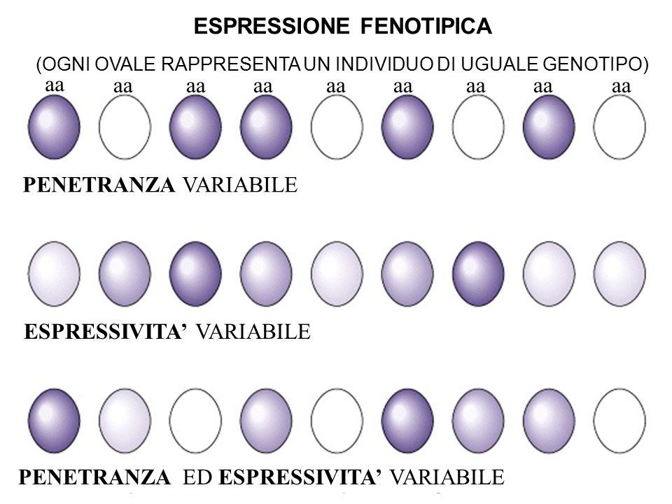 ESPRESSIONE FENOTIPICA