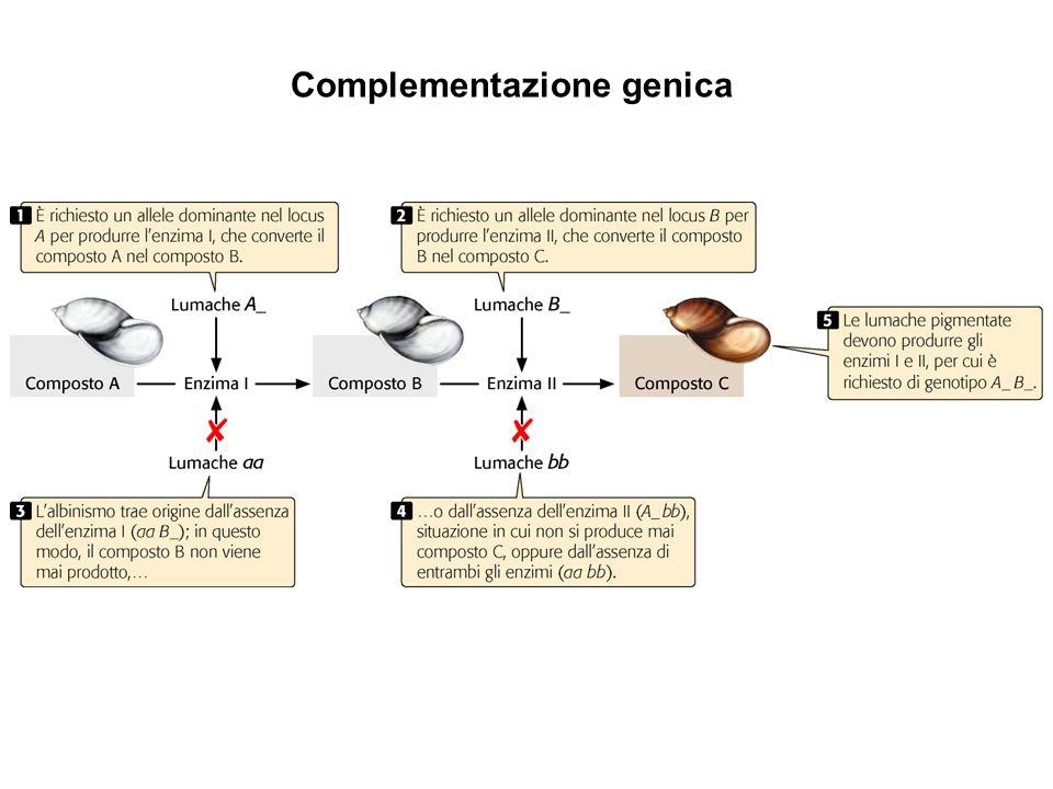 Complementazione genica