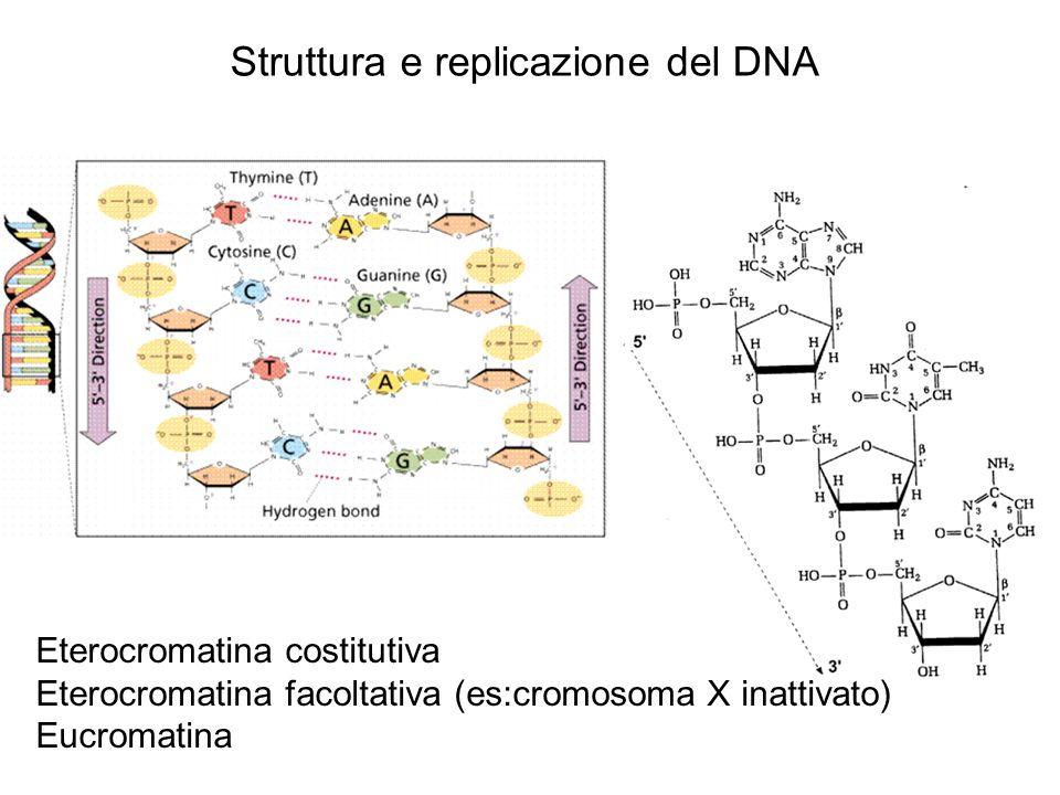 Struttura e replicazione del DNA