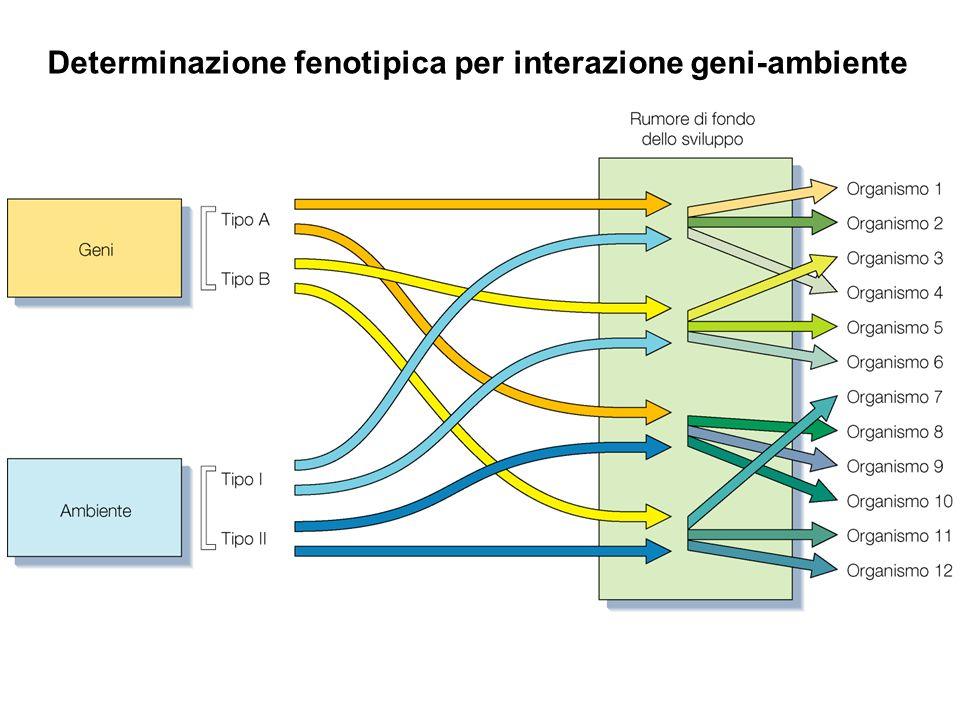 Determinazione fenotipica per interazione geni-ambiente