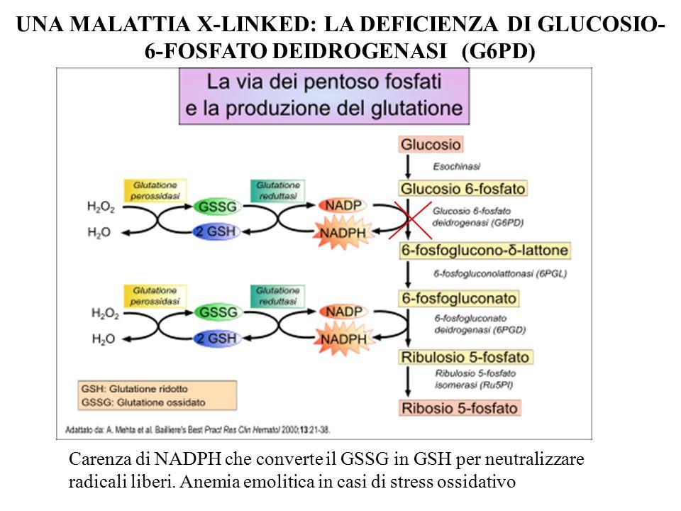 UNA MALATTIA X-LINKED: LA DEFICIENZA DI GLUCOSIO-6-FOSFATO DEIDROGENASI (G6PD)