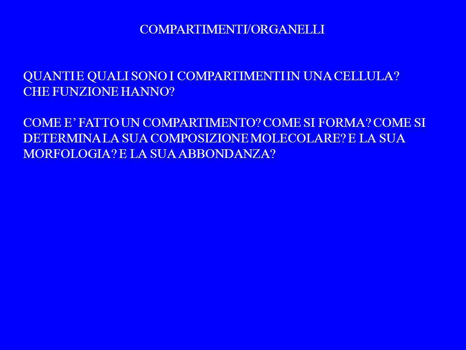 COMPARTIMENTI/ORGANELLI