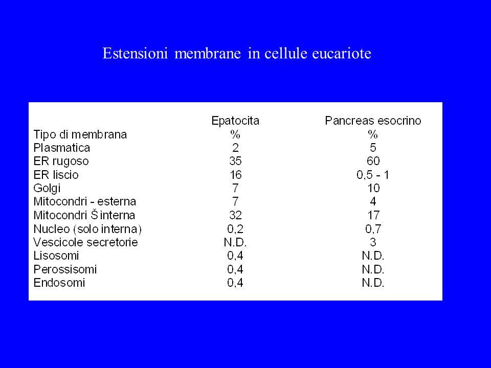 Estensioni membrane in cellule eucariote