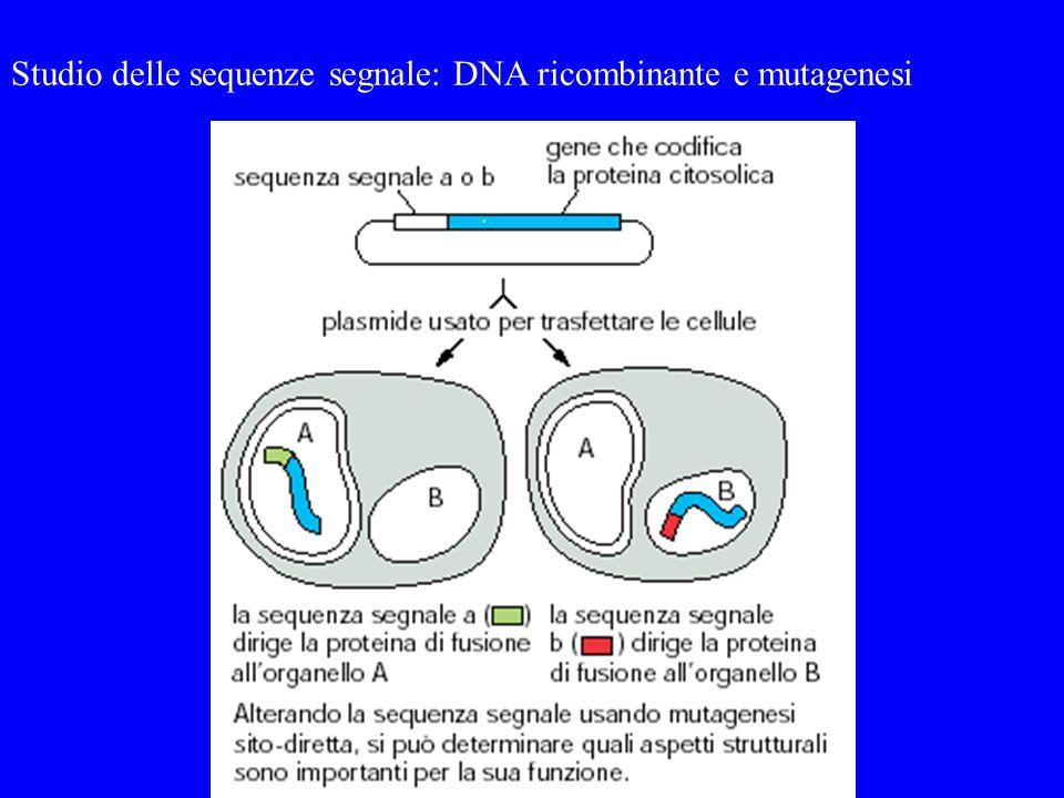 Studio delle sequenze segnale: DNA ricombinante e mutagenesi