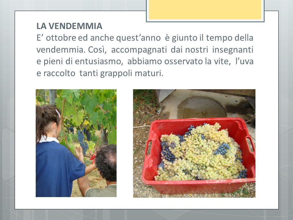 Preferenza Classi 2^A 2^B 3^A Scuola Primaria di Loro Ciuffenna a.s - ppt  OY76