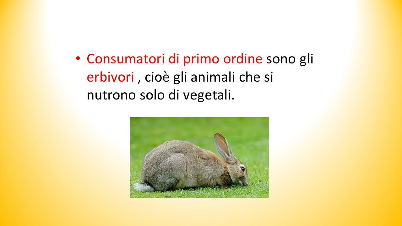 Consumatori di primo ordine sono gli erbivori , cioè gli animali che si nutrono solo di vegetali.