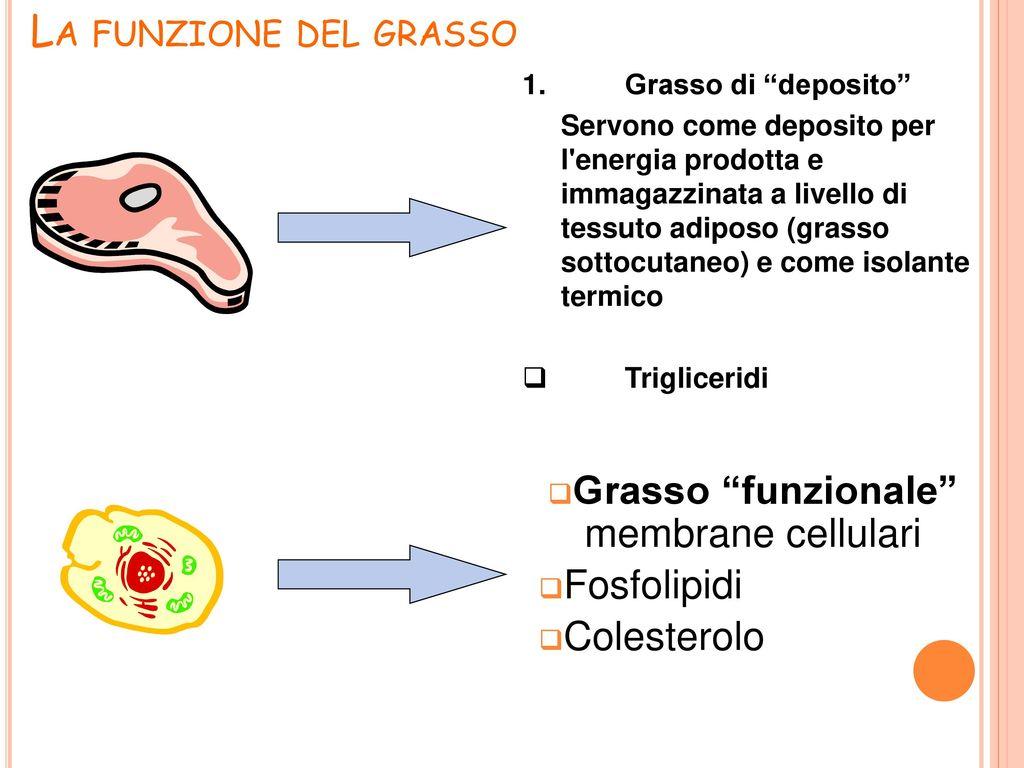 La qualit della carne ppt scaricare for Tessuto isolante termico