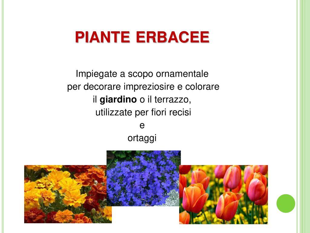 Saper scegliere le piante in vivaio ppt video online for Tutto per il terrazzo