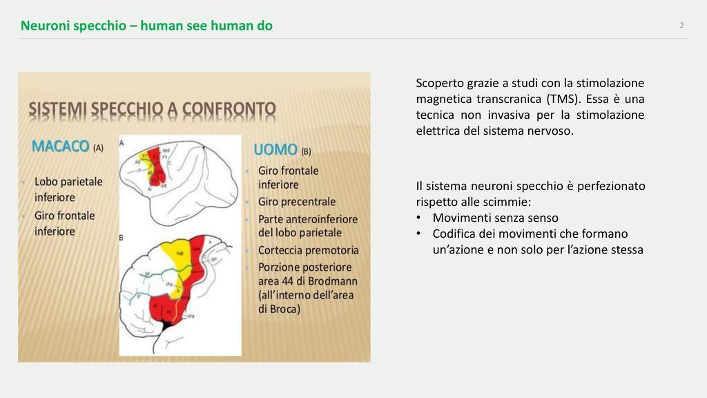 Neuroni Specchio Neuroni Specchio Ivan Giuseppe Larenza