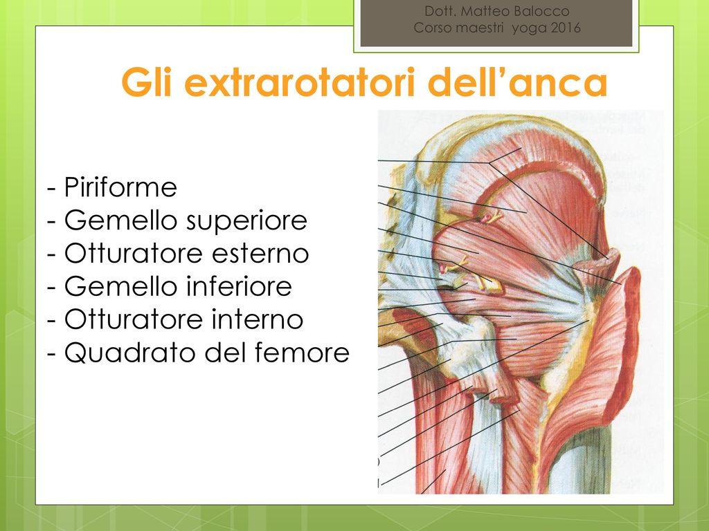 corso di anatomia e fisiologia ppt video online scaricare