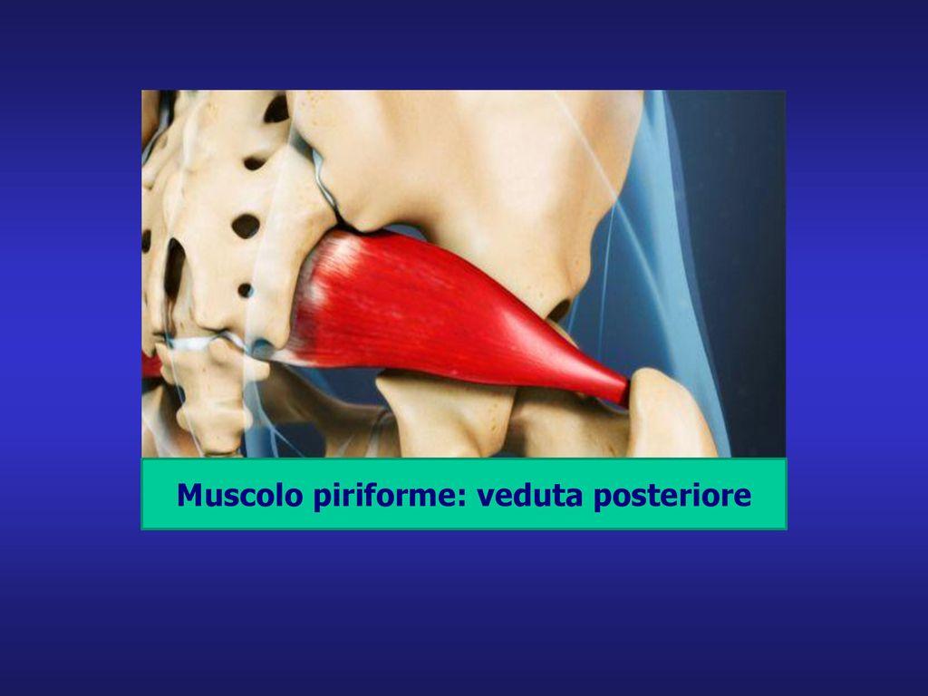 Muscolo piriforme: veduta posteriore