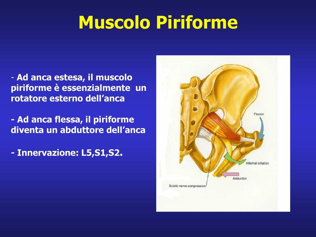 Muscolo Piriforme - Ad anca estesa, il muscolo