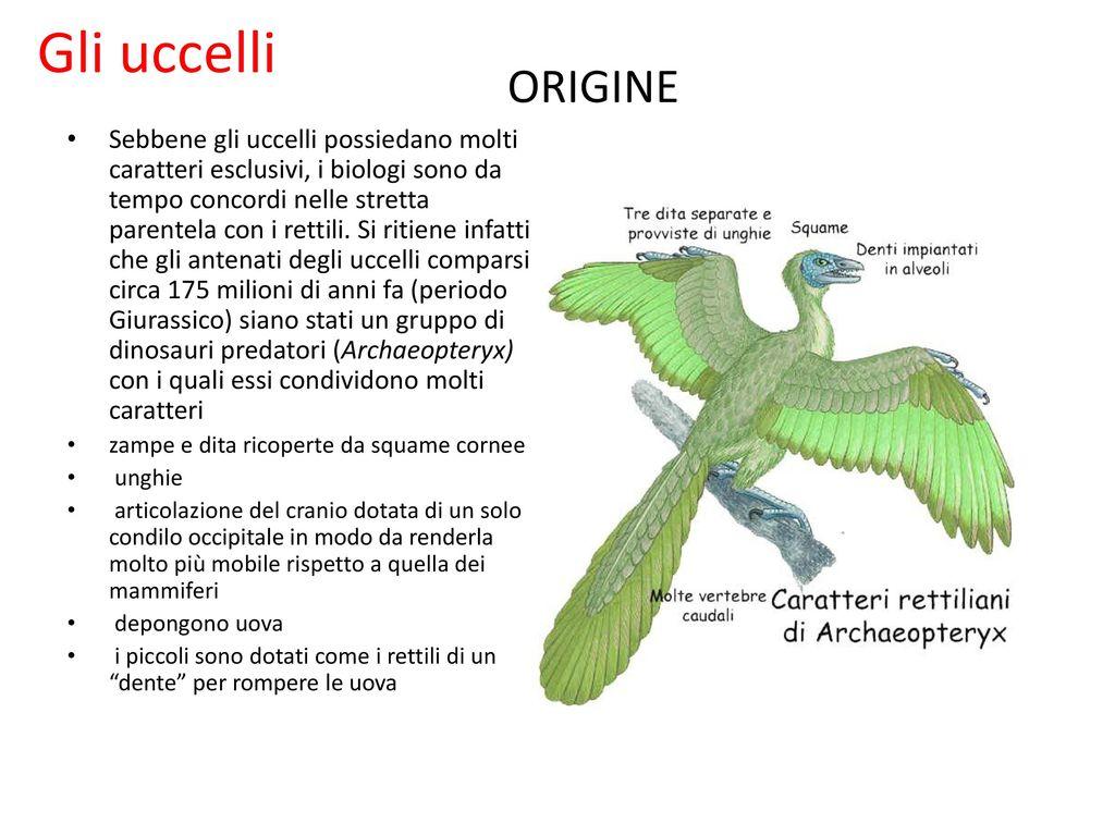 L albero filogenetico del regno degli animali ppt scaricare for Quali sono i rettili