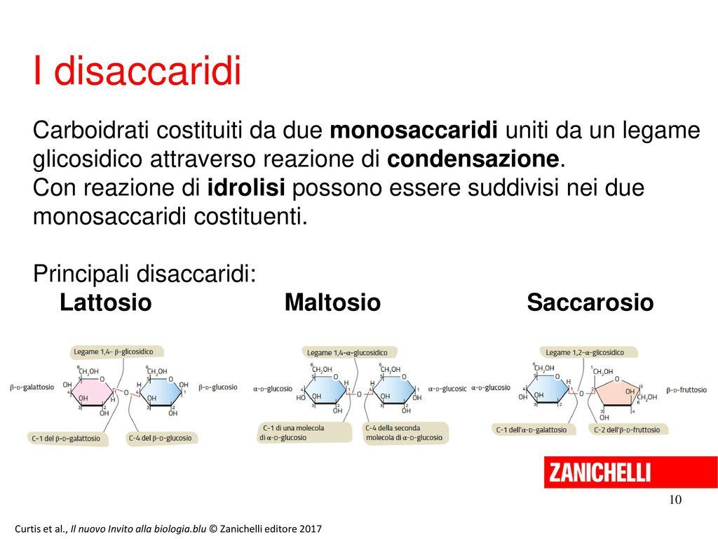 13/11/11 I disaccaridi. Carboidrati costituiti da due monosaccaridi uniti da un legame glicosidico attraverso reazione di condensazione.