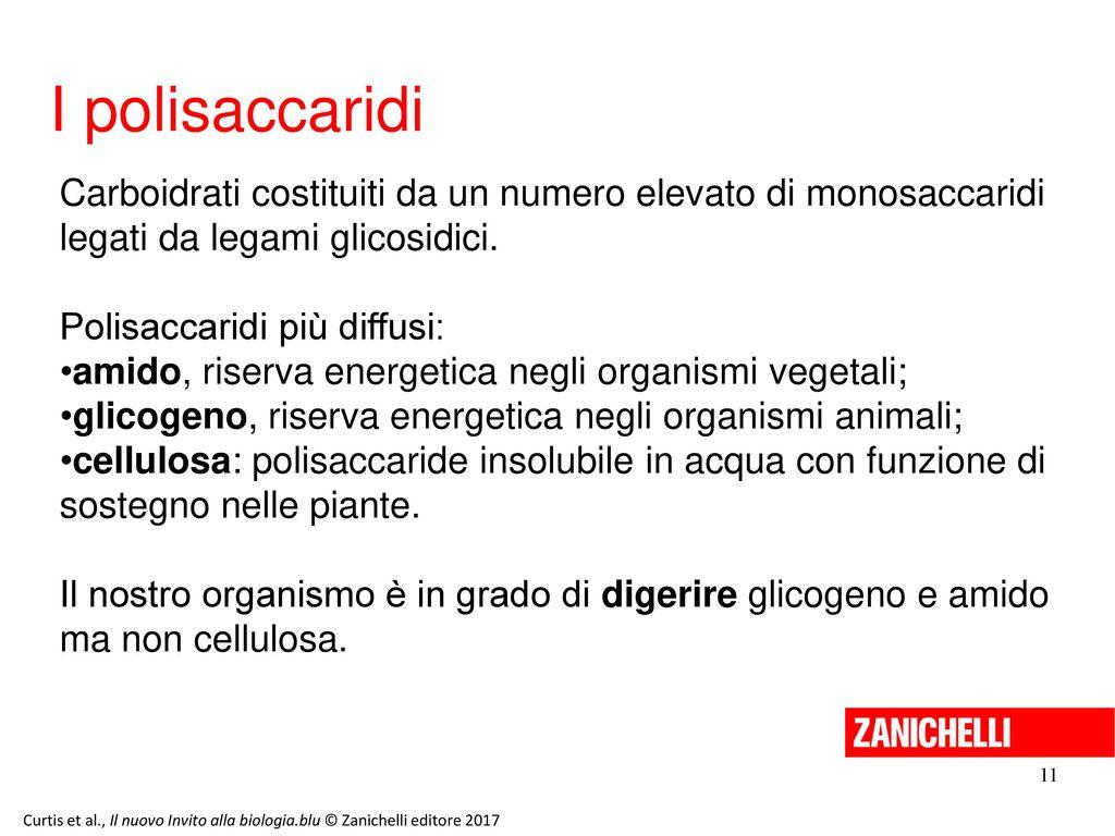 13/11/11 I polisaccaridi. Carboidrati costituiti da un numero elevato di monosaccaridi legati da legami glicosidici.