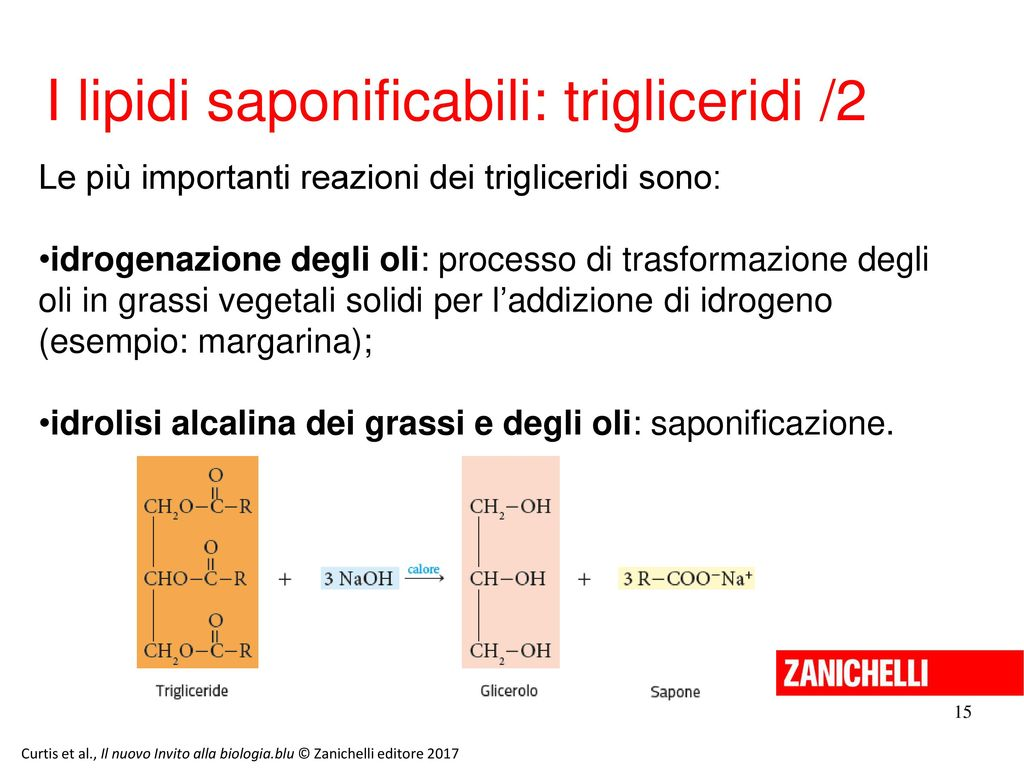 I lipidi saponificabili: trigliceridi /2