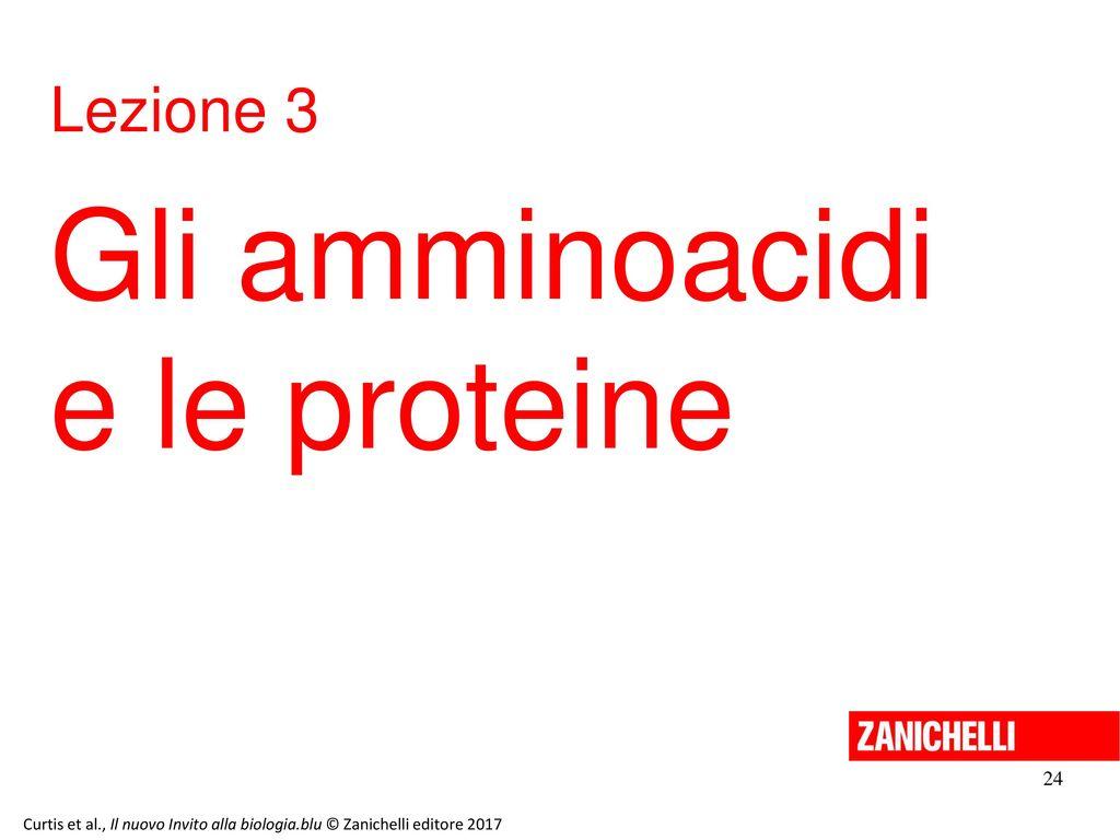 Gli amminoacidi e le proteine Lezione 3 24 13/11/11 24