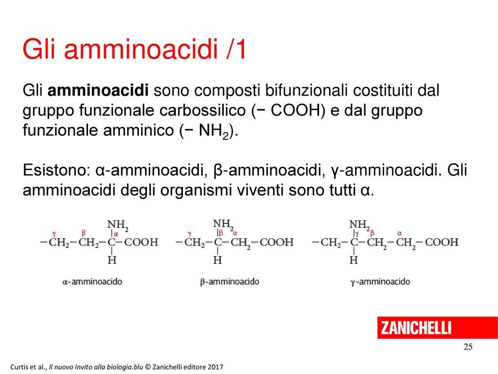 13/11/11 Gli amminoacidi /1.