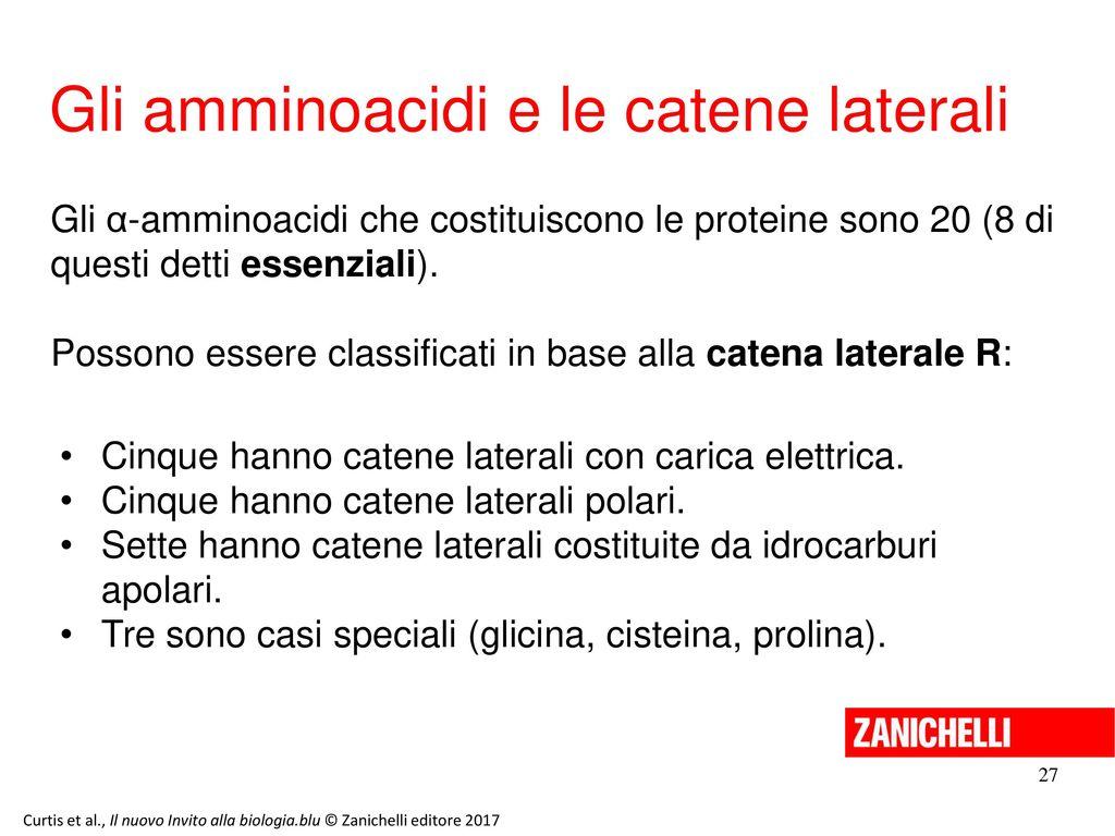 Gli amminoacidi e le catene laterali