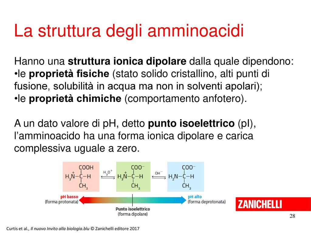 La struttura degli amminoacidi