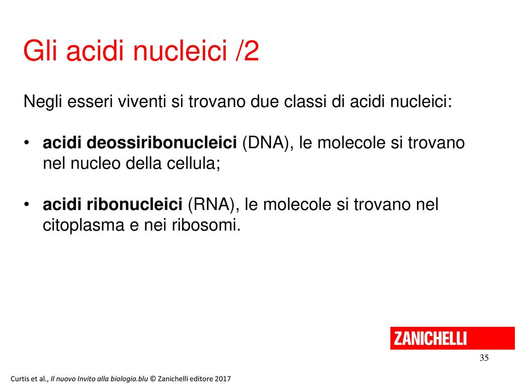 13/11/11 Gli acidi nucleici /2. Negli esseri viventi si trovano due classi di acidi nucleici:
