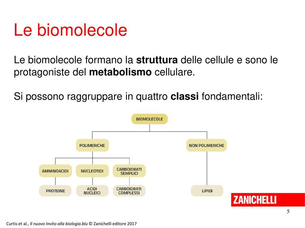 13/11/11 Le biomolecole. Le biomolecole formano la struttura delle cellule e sono le protagoniste del metabolismo cellulare.
