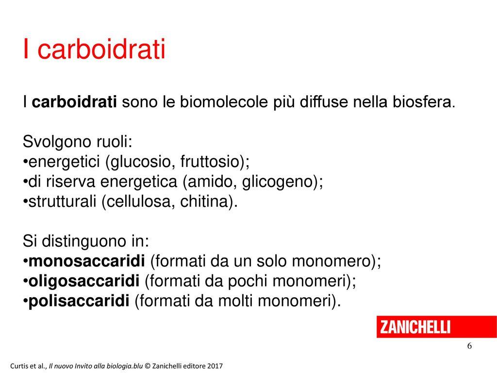 13/11/11 I carboidrati. I carboidrati sono le biomolecole più diffuse nella biosfera. Svolgono ruoli: