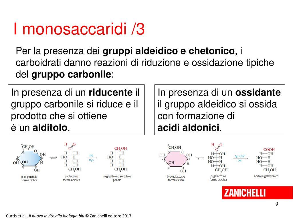 13/11/11 I monosaccaridi /3.