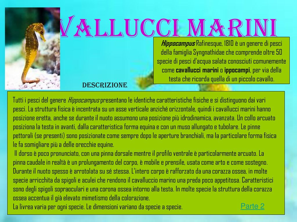 Animali della scogliera corallina ppt scaricare - Colorazione cavallucci marini in ...