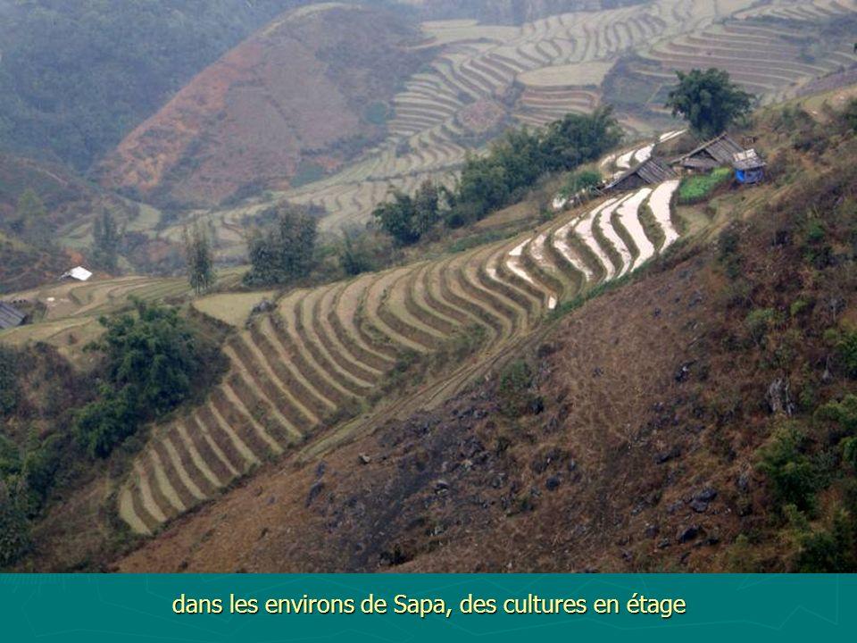 dans les environs de Sapa, des cultures en étage