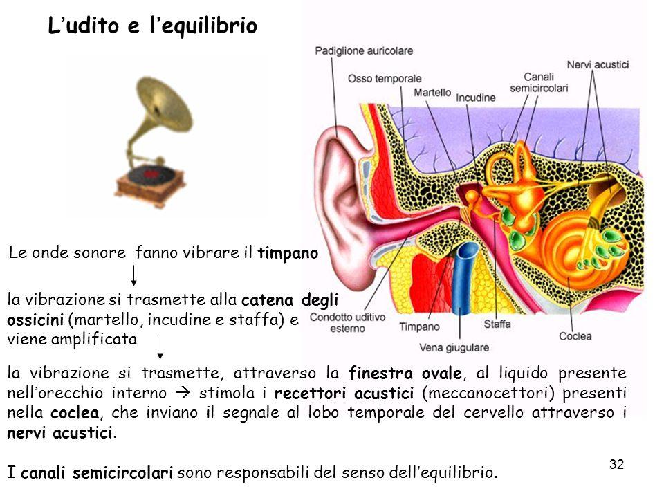 L'udito e l'equilibrio