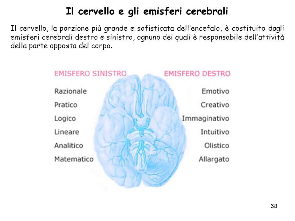 Il cervello e gli emisferi cerebrali