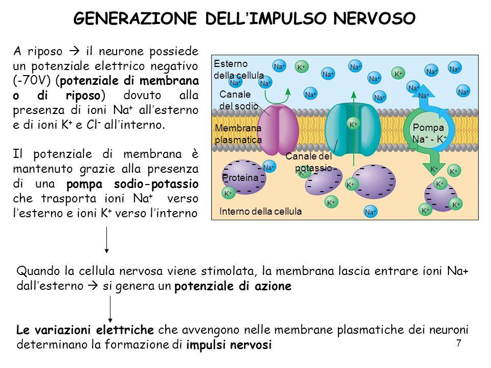 GENERAZIONE DELL'IMPULSO NERVOSO