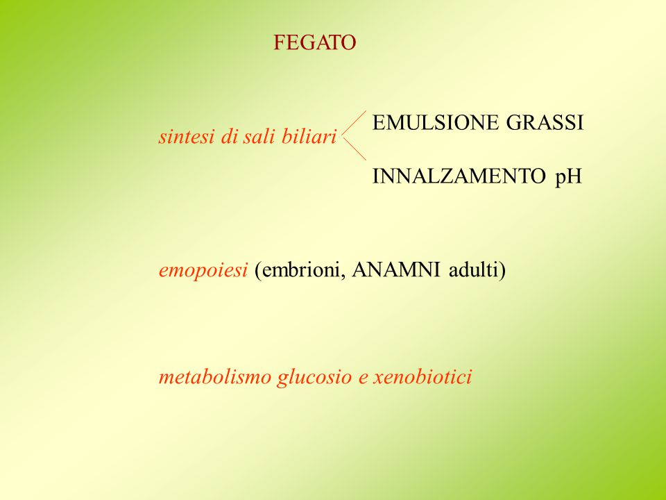 FEGATO EMULSIONE GRASSI. INNALZAMENTO pH. sintesi di sali biliari. emopoiesi (embrioni, ANAMNI adulti)