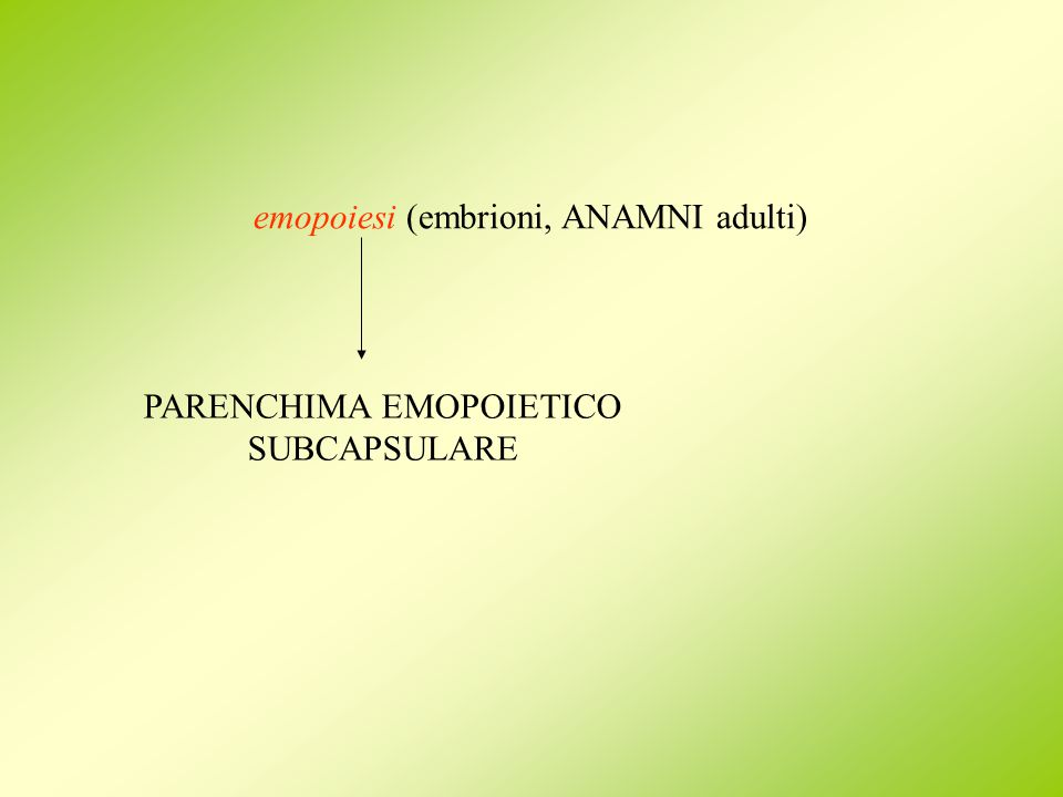 PARENCHIMA EMOPOIETICO