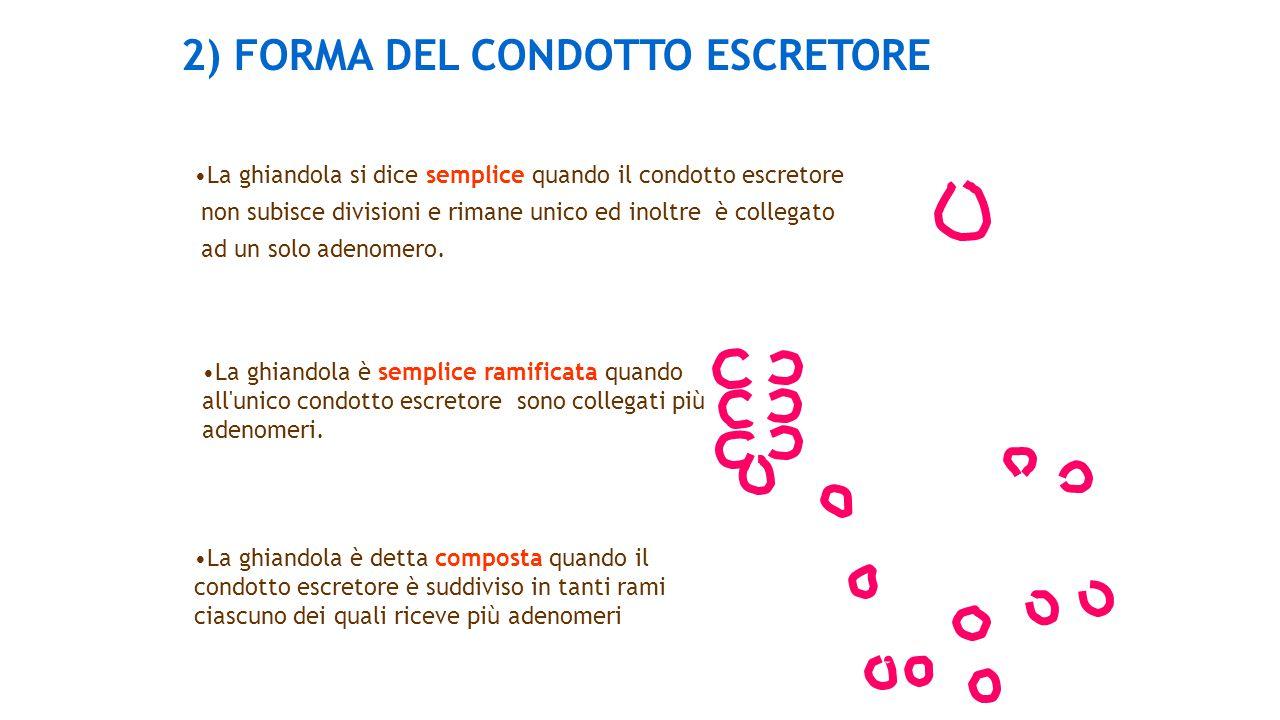 2) FORMA DEL CONDOTTO ESCRETORE