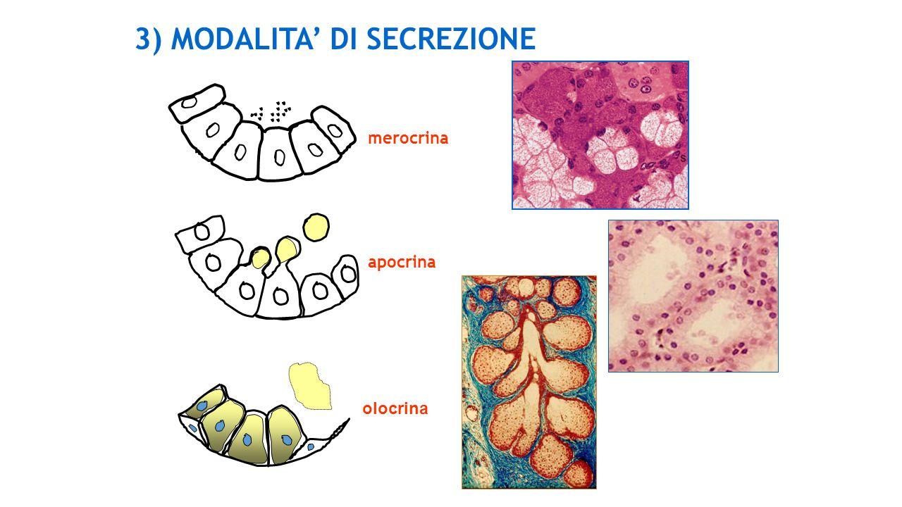 3) MODALITA' DI SECREZIONE