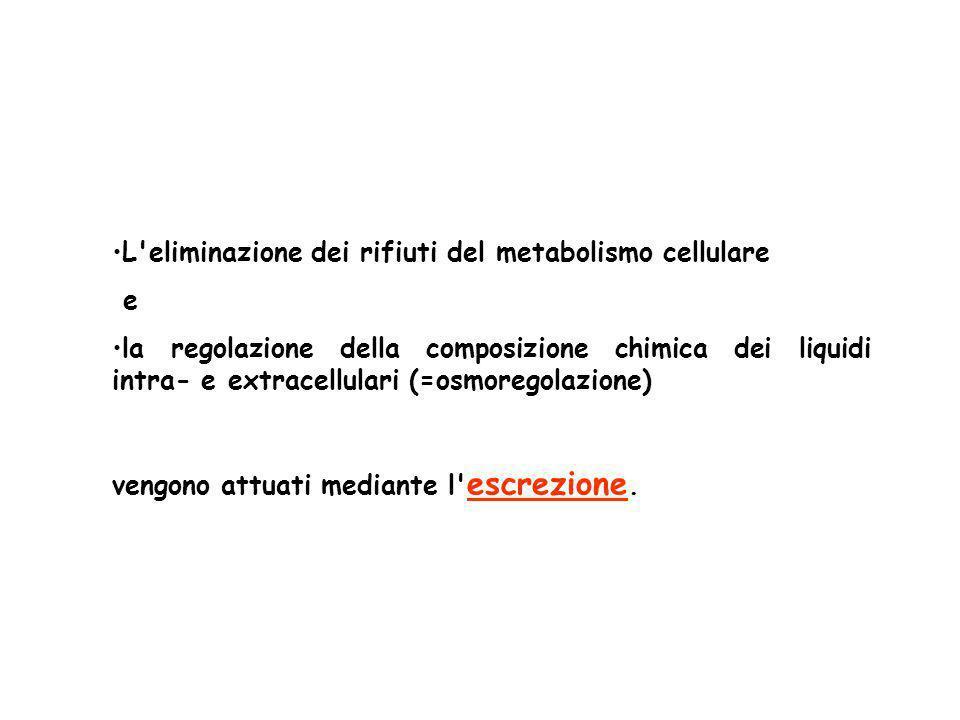 L eliminazione dei rifiuti del metabolismo cellulare