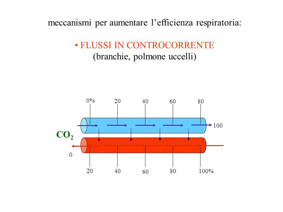 meccanismi per aumentare l'efficienza respiratoria: