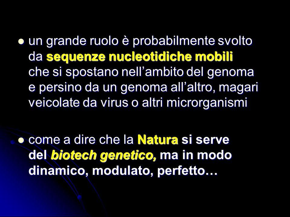 un grande ruolo è probabilmente svolto da sequenze nucleotidiche mobili che si spostano nell'ambito del genoma e persino da un genoma all'altro, magari veicolate da virus o altri microrganismi