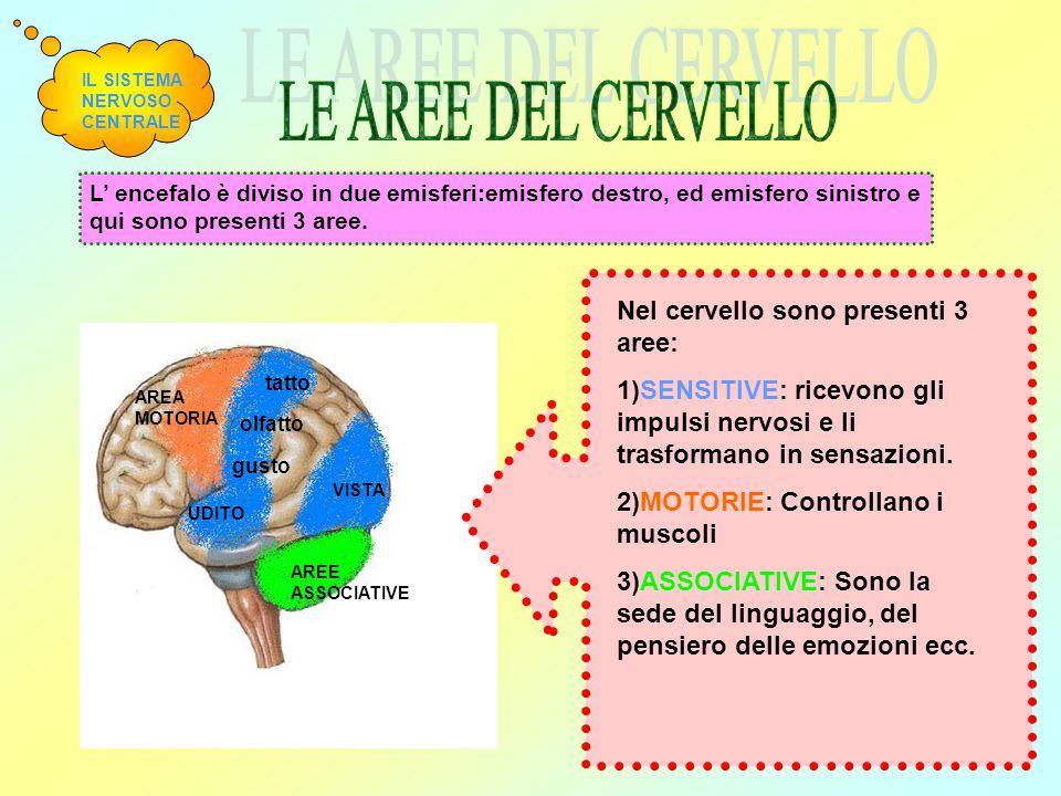LE AREE DEL CERVELLO Nel cervello sono presenti 3 aree: