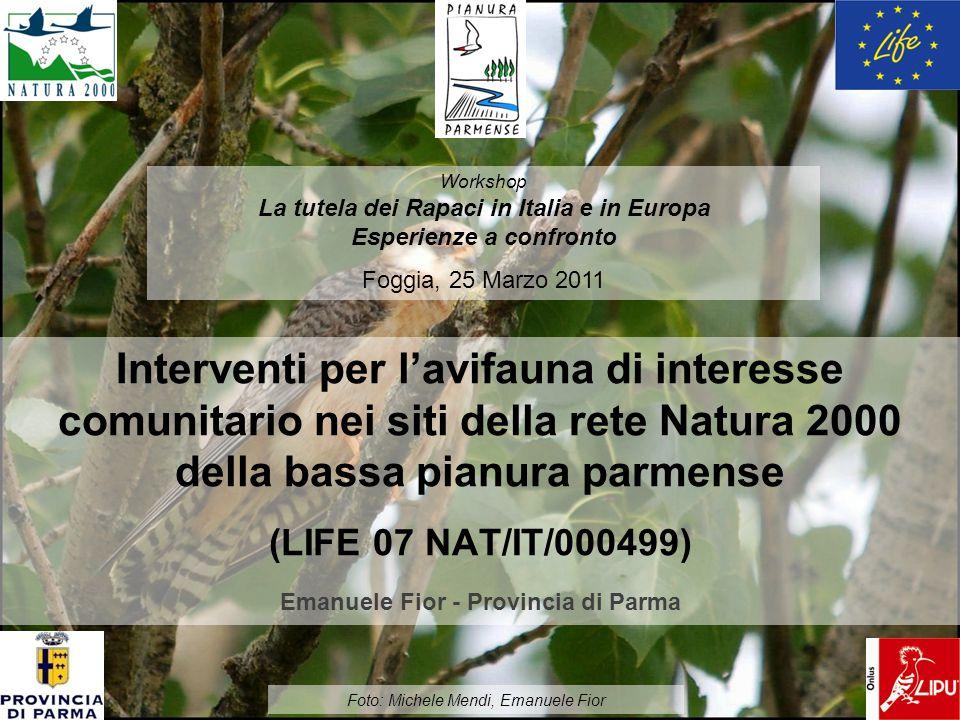 Workshop La tutela dei Rapaci in Italia e in Europa. Esperienze a confronto. Foggia, 25 Marzo 2011.