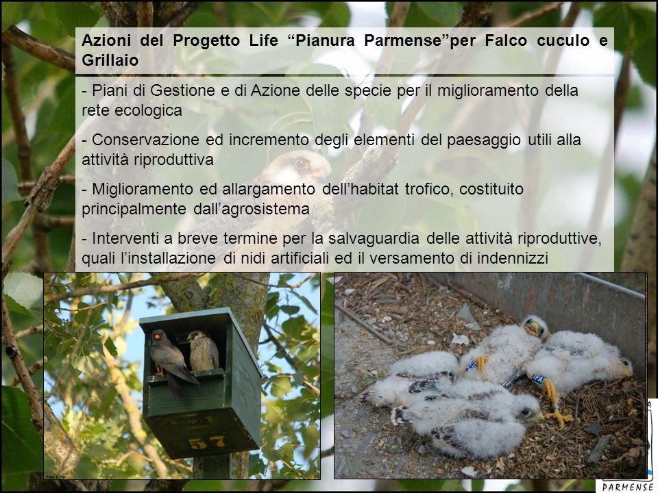 Azioni del Progetto Life Pianura Parmense per Falco cuculo e Grillaio