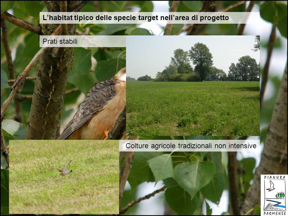L'habitat tipico delle specie target nell'area di progetto