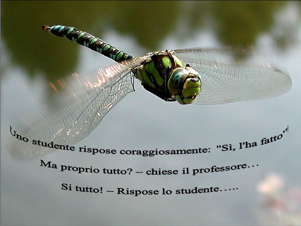 Uno studente rispose coraggiosamente: Sì, l ha fatto !