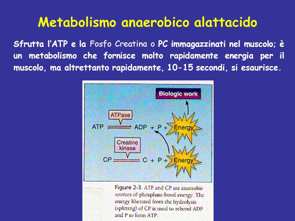 Metabolismo anaerobico alattacido