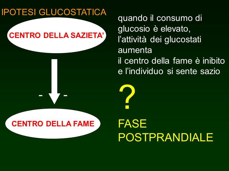 - - FASE POSTPRANDIALE IPOTESI GLUCOSTATICA quando il consumo di