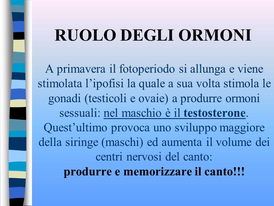 RUOLO DEGLI ORMONI